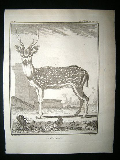 Buffon: C1770 Male Axis, Spotted Deer, Antique Print | Albion Prints